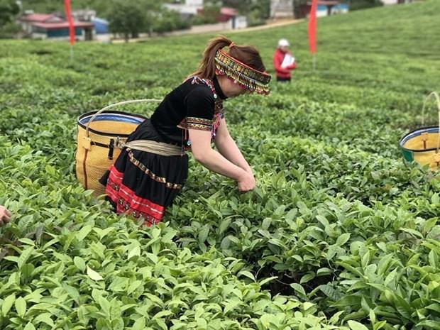 越南对中国和印度茶叶出口实现突飞猛进式的增长 hinh anh 1