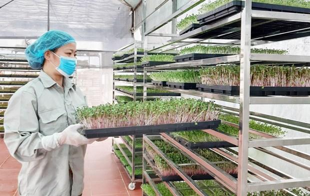 """河内市即将举行""""一乡一品""""产品和安全农产品产销对接会 hinh anh 1"""
