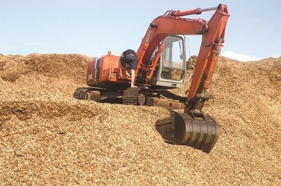 今年前7个月越南木屑出口额超过10亿美元 hinh anh 1