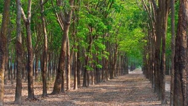 越南力争实现2030年森林覆盖率达42-43%下的目标 hinh anh 1