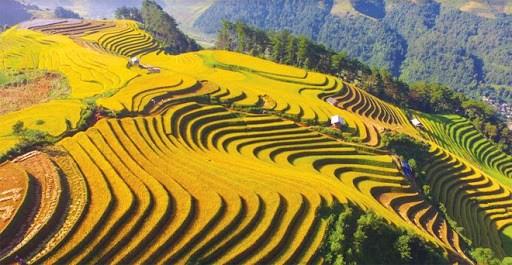 越南旅游:令人沉醉的木江界梯田 hinh anh 1