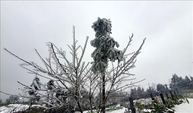 老街省出现雨雪天气 hinh anh 1