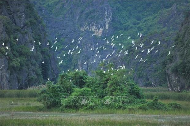 越南努力保护并可持续利用湿地资源 hinh anh 1