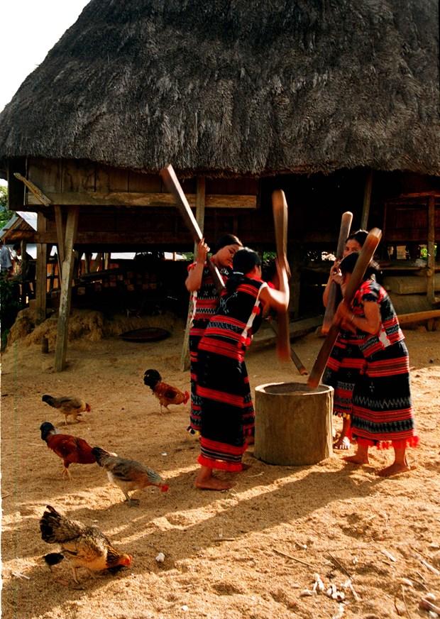 西原文化中舂米的声音 hinh anh 1