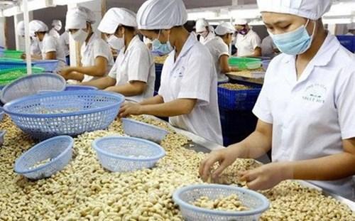 2021年越南力争实现腰果出口额达40亿美元的目标 hinh anh 1