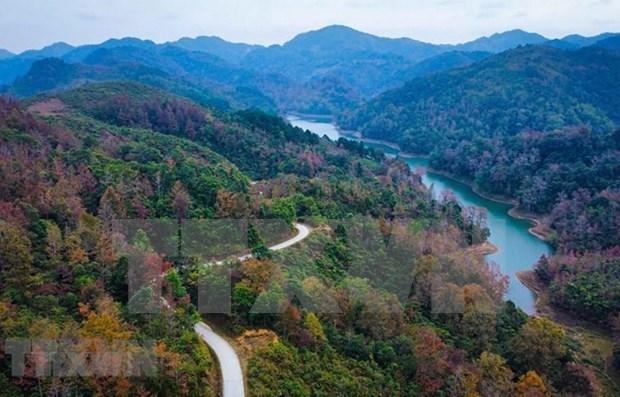 2021-2025年越南将种植10亿棵树 hinh anh 1