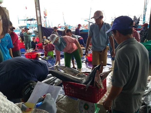 越南中南部地区渔民春节期间海上鱼获丰收 hinh anh 1