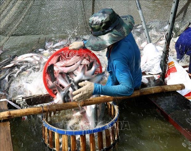 前2个月越南水产品出口总额增长2.2% hinh anh 1