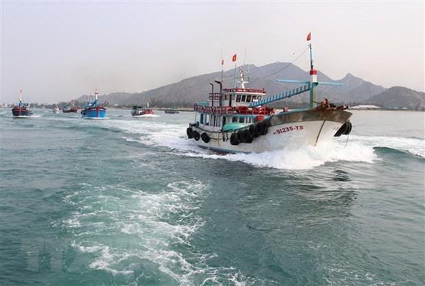 解除IUU黄牌警告:越南努力打击非法捕捞行为 hinh anh 1