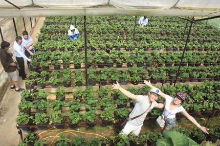 林同省的农业旅游 hinh anh 1