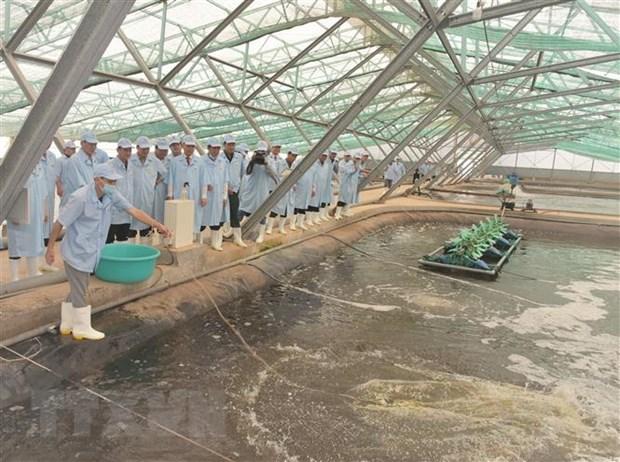 将薄辽省建设成为全国虾类行业发展中心 hinh anh 1