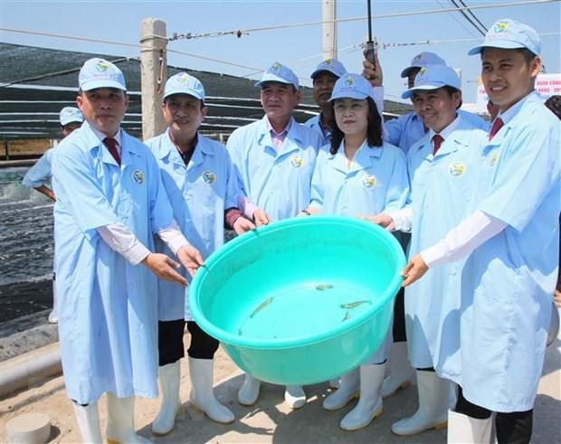 将薄辽省建设成为全国虾类行业发展中心 hinh anh 2