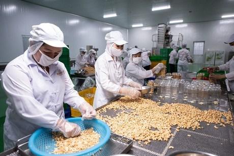 越南与波兰在农产品与食品贸易领域中的合作潜力巨大 hinh anh 1