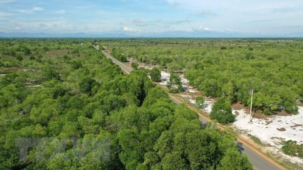 越南力争将林业打造成为效益高、竞争力强的经济-技术产业 hinh anh 1