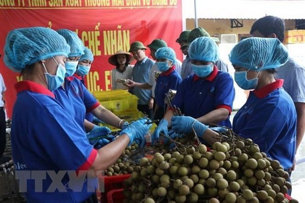 越南充分开发向澳大利亚的农产品出口潜力 hinh anh 1