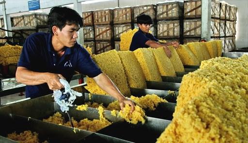 越南橡胶出口额猛增 hinh anh 1