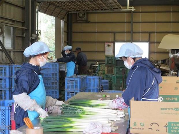 新冠肺炎疫情:克服日本市场劳动力短缺的现象 hinh anh 1