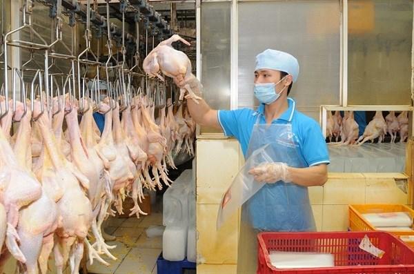 2021年第一季度越南畜产品出口额同比增长了34.7% hinh anh 1