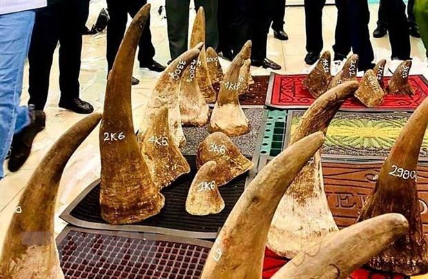越南向南非移交56个犀牛角DNA样本 hinh anh 1