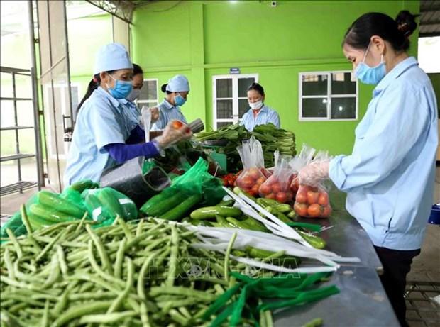 越南合作社联盟促进农产品供需对接 hinh anh 1