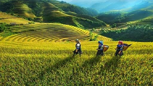 少数民族地区和山区经济发展:将科技是为重要基础 hinh anh 1