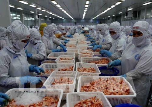 越南要研究对俄罗斯和波兰等新市场进行虾类出口 hinh anh 2