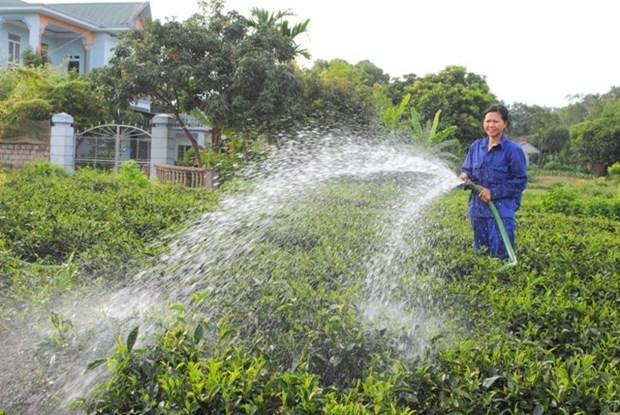 推动首都河内农业恢复增长 hinh anh 1