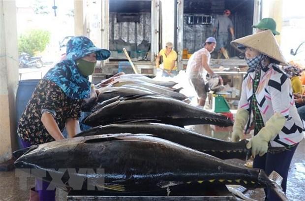 EVFTA生效之后越南金枪鱼对欧洲出口呈两位数增长 hinh anh 1