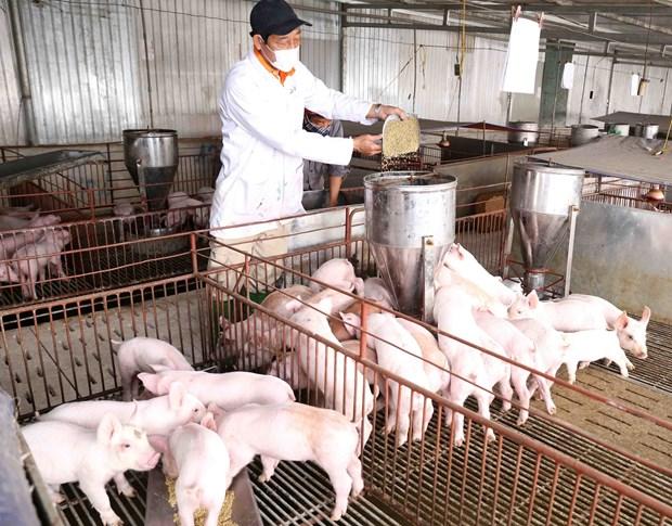 农业与农村发展部副部长冯德进:今年农林水产品出口额将达400亿多美元 hinh anh 2