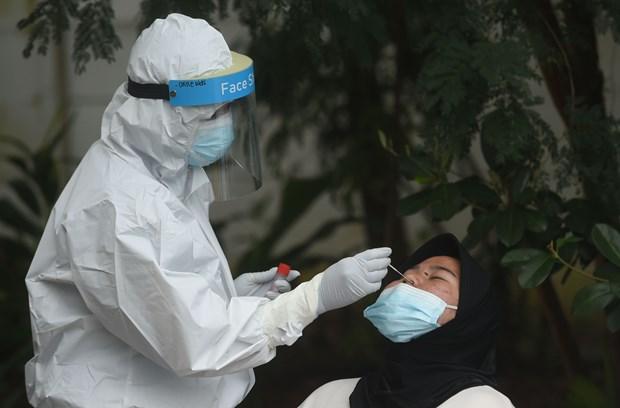 马来西亚、印尼、菲律宾新冠肺炎确诊病例急剧增加 hinh anh 1