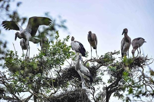 自然资源与环境部建议成立越南拉姆萨尔湿地网络 hinh anh 1