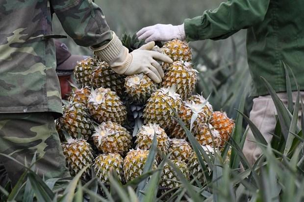 第一季度越南蔬果出口回升 hinh anh 1