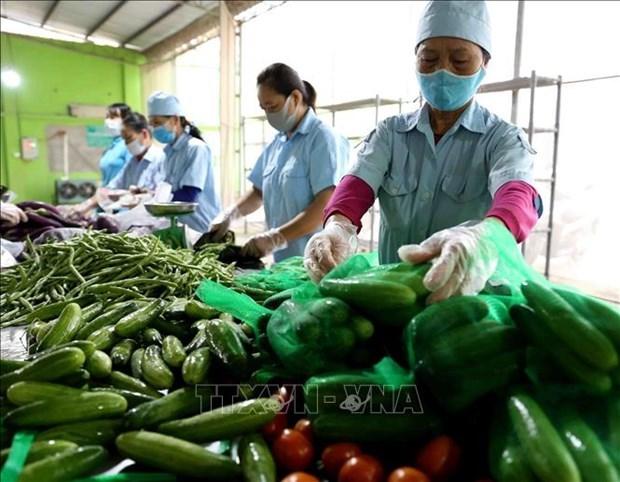 2021年前4月越南农林水产品出口额增长24%以上 hinh anh 1