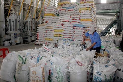 自由贸易协定成为撬动越南大米出口的杠杆 hinh anh 1