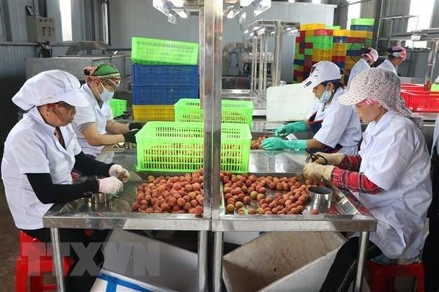 """通过""""越南网上商城"""" 帮助各家企业销售海阳荔枝和其他农产品 hinh anh 1"""