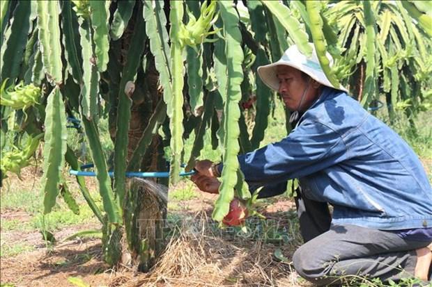 Nong dan Binh Thuan dao ao, xay be tich tru nuoc de ung pho voi han han hinh anh 4
