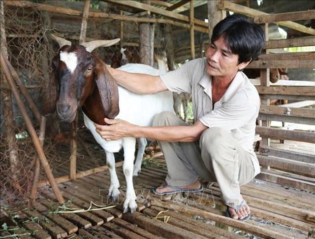Gia de, cuu tai Ninh Thuan lien tuc tang cao hinh anh 1