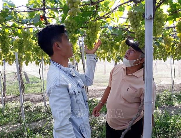 Ninh Thuan tao buoc dot pha, thuc day du lich nong nghiep phat trien ben vung hinh anh 2