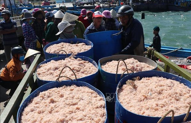 Ngu dan Phu Yen trung dam mua ruoc trong chuyen bien dau nam hinh anh 1