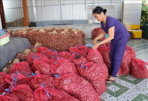 Nong san chu luc cua Ninh Thuan gap kho ve dau ra hinh anh 1