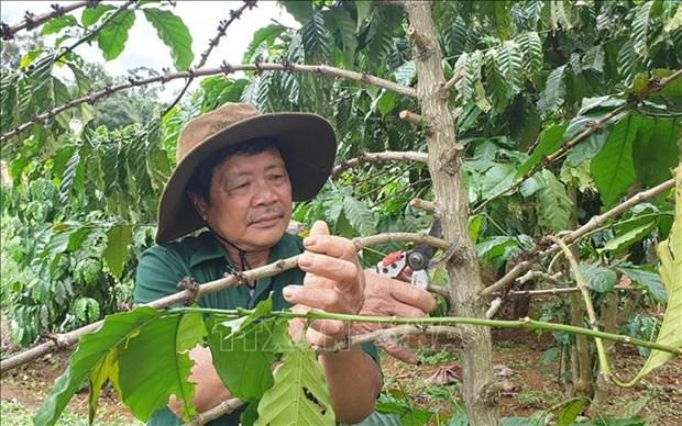Ong Pham Van Xay gop phan thay doi nep nghi, cach lam kinh te trong dong bao dan toc thieu so o Kbang hinh anh 2