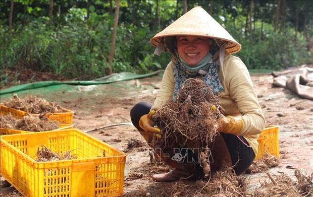Gia Lai huong toi phat trien va xay dung vung duoc lieu hinh anh 5