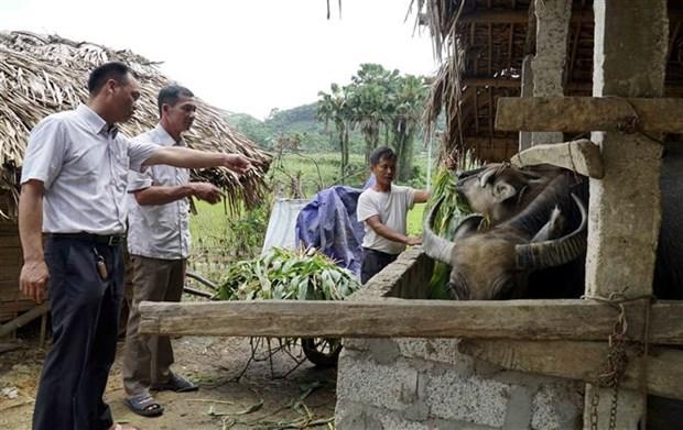 Bi thu Chi bo vung cao Yen Son (Tuyen Quang) dan van kheo hinh anh 3