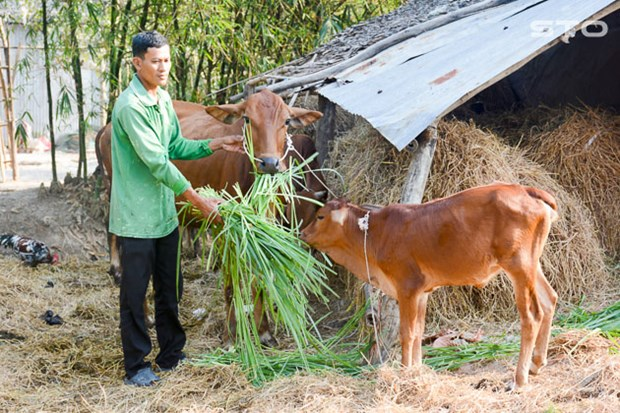 Soc Trang no luc giam nhanh ho ngheo o vung dong bao Khmer hinh anh 1