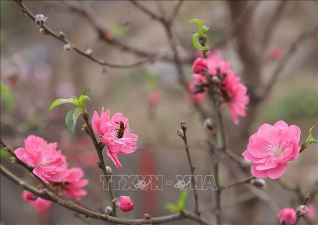 Muon sac hoa chao don Xuan Tan Suu hinh anh 2
