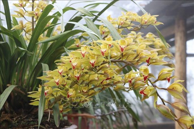 Muon sac hoa chao don Xuan Tan Suu hinh anh 3