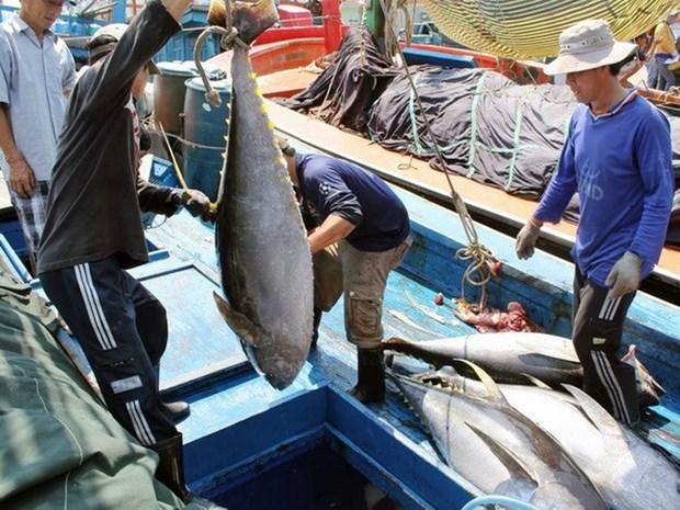 越南金枪鱼出口企业应着力开发国内市场 hinh anh 1
