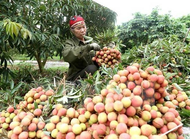 越南与中国继续加强农产品贸易交往 hinh anh 1