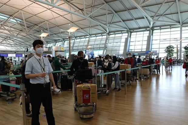 将在韩国的越南公民运送回国 hinh anh 1
