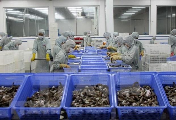 越南虾产业努力恢复虾类出口市场 hinh anh 1
